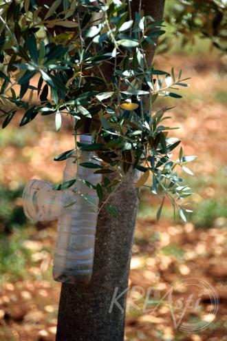 Die Flasche ist eine natürliche Insektenfalle