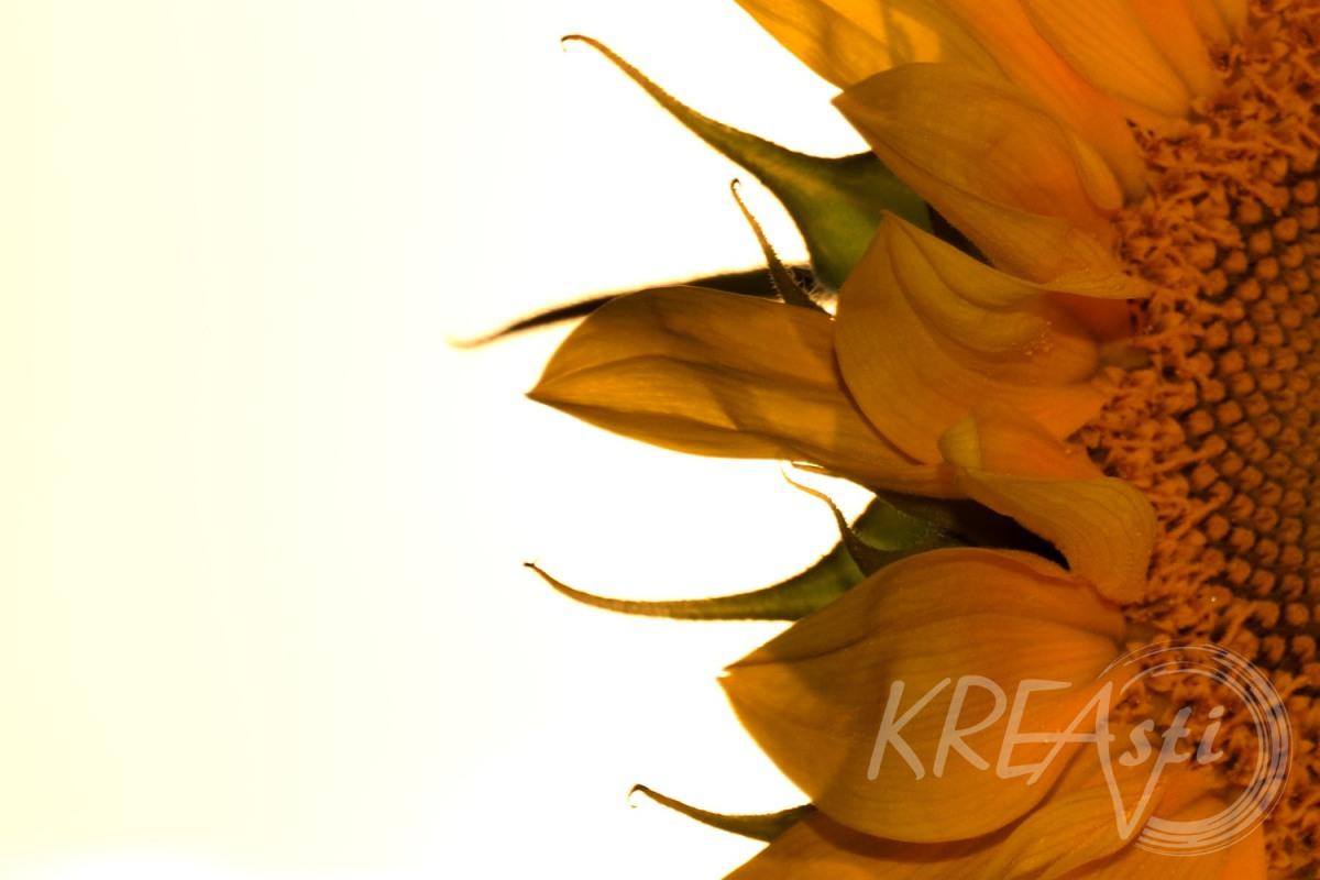 Gute-Laune-Blume