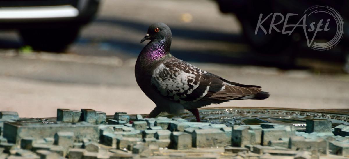 Kleine Taube ganz groß - Croatia Teil 5